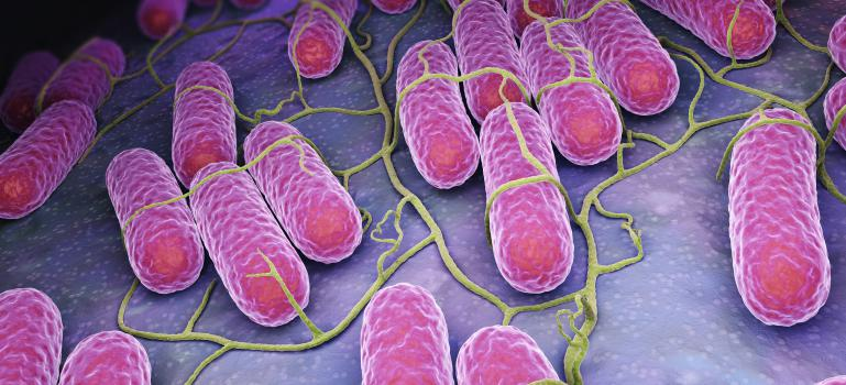Salmonella Poona multi-country outbreak linked to infant formula