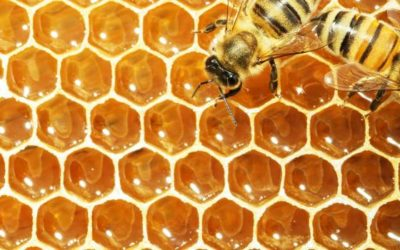 Bees and pesticides: stakeholders to participate in guidance review