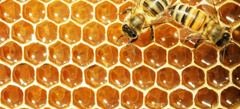 Guidance on bees and pesticides: work plan published