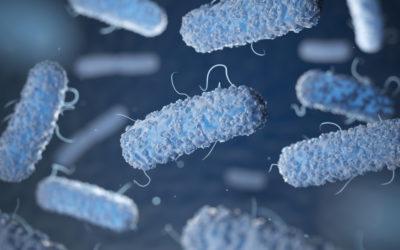 One dead, dozens hospitalised in Spain listeria outbreak