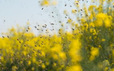 Pesticides and bees: evidence on mortality rates reviewed