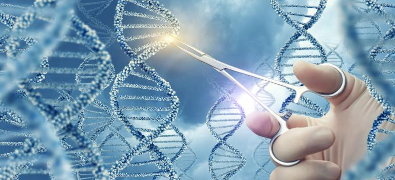 Existing guidance appropriate for assessment of genome editing in plants
