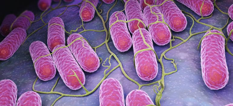 Campylobacter and Salmonella cases stable in EU