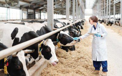 Veterinary drug residues: compliance still high