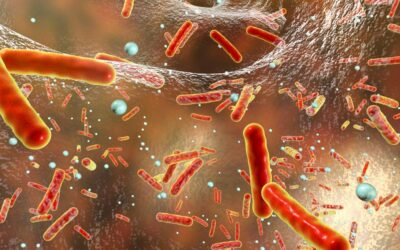 Resistance levels still high in bacteria causing foodborne infections
