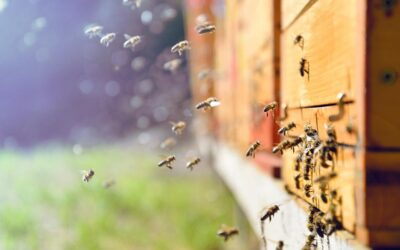 Protecting bees: a new way forward for risk assessment