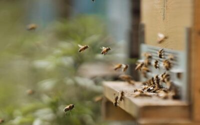 Register now: A New Deal for Pollinators